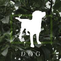 box_dog
