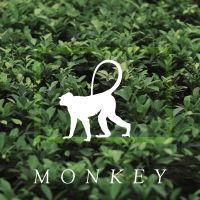 box_monkey