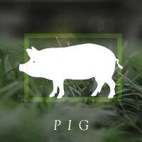 box_pig