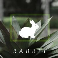 box_rabbit