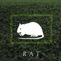 box_rat