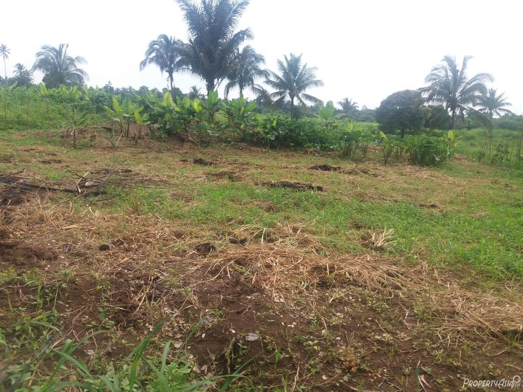 300 sqm agriculture for sale in brgy dagatan amadeo philippines